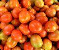 UN 9522 F1 Tomato Seeds