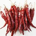 Dried Red Chilli s17