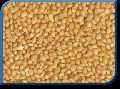 Golden Foxtail Millet