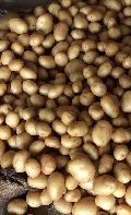 Surya Potato