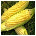 Frozen Corn On Cob