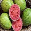 HONGKONG Guavas