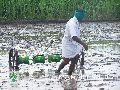 paddy field farm equipment
