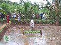 Rice Seed drill machine