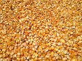 Animal Feed Yellow Corn Maize