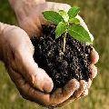 Plant Based Organic Manure