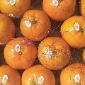 Organic Kinnow