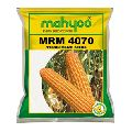 Maize MRM 4070 Hybrid Maize Seeds