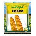 MRM 3838 Hybrid Maize Seeds