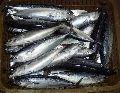 Chilled Tuna Fish