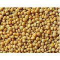 Organic Yellow Mustard Seeds