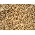 Raw Wheat Grain