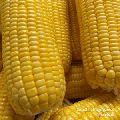 Natural Yellow Corn