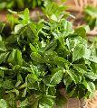 Natural Fenugreek Leaves