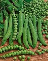 Natural Green Peas