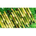 Organic Sugarcane