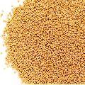Natural Yellow Mustard Seeds
