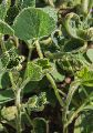 Anilofos 30% E.C. Herbicide