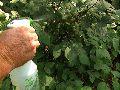 Metalaxyl 8% + Mancozeb 64% WP Fungicide