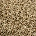 Brown Top Millet Seeds