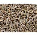 Organic Cumin Seeds