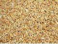Dried Wheat Seeds