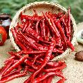 Raw Dried Red Chilli