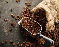 Coffee Seeds
