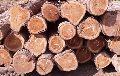 Cherry Wood Logs