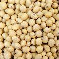 Hybrid Soybean Seeds