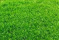 Green Landscape Grass