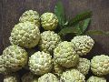 Green Custard Apple