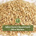 Yellow Natural Sesame Seeds Micro Machine