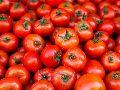 Fresh Red Tomato