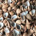 Raw Copra Coconut