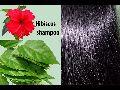 Ashly Ayur Herbal Hibiscus Hair Shampoo