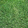 Selection 1 Grass Carpet
