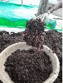 Organic Earthworm Vermicompost