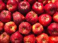 Kashmir Apples