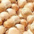 coconut  (edible)