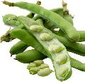 Whole Broad Beans