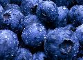Frozen cultivated blueberries