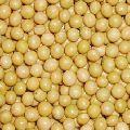Organic Soybean Oil Seeds