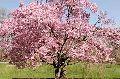Flowering Shrub Plants
