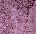 Dehydrated Red Onion Powder