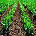 bio fertilizer manufacture in jaipur