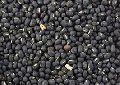 Black Gram Beans