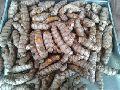 Turmeric Seeds