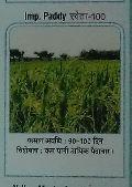 Shweta-100 Paddy Seeds