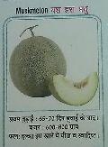 Yash Hara Madhu Fresh Muskmelon